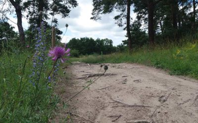 Dünen am Stadtrand – das Naturschutzgebiet Mainzer Sand