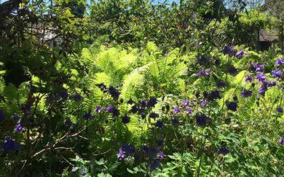Musik im Garten bei Odile Landragin