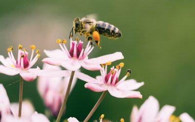 Echte Geschichten von Bienen und Blumen